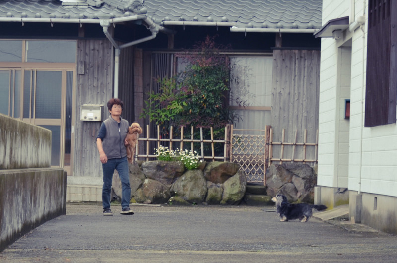 沖之島の犬