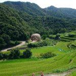 小豆島「オリーブの夢」を見てきました。