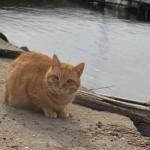 家島で出会った猫