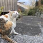 ネコの島、青島を訪れました。