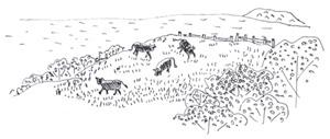 男木島の牧場