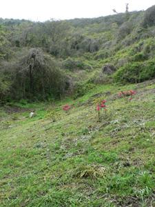 男木島の牧場跡