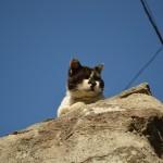 伊吹島で出会った島猫:12匹