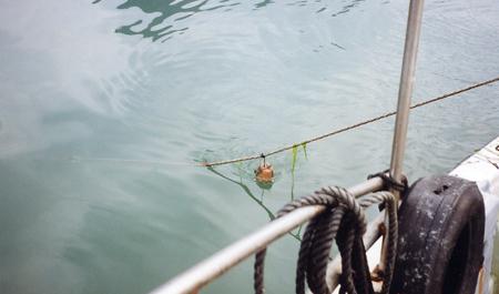 飯蛸壺漁_02