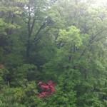 鶯(ウグイス)の声が響く森。香川?県 綾川町 枌所(そぎしょ)。